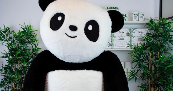 Insights the cheeky panda