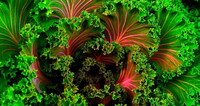 Insights veganism movement